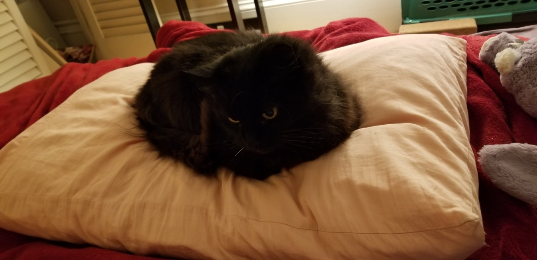 Kitty-Kitter 1