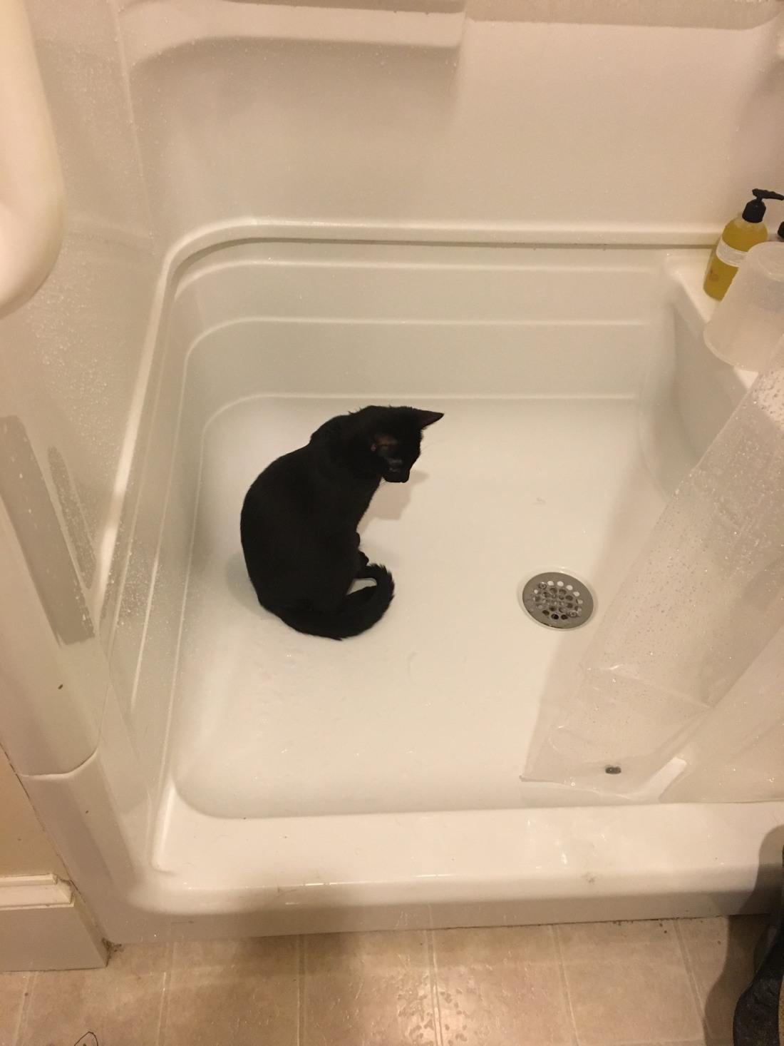 P - shower